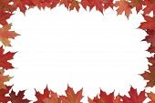 Red Maple Leaf Poster Or Card