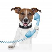 image of telephone operator  - dog on the phone talking and calling - JPG
