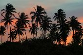 Palm Grove On A Tropical Island At Sunset Wide