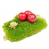 stock photo of bearberry  - Three red cranberries on a clump of green moss isolated on a white background - JPG