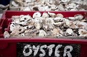 stock photo of oyster shell  - Oyster shells in plastic crates - JPG