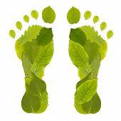 Leaf Footprint