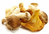 stock photo of chanterelle mushroom  - heap of diffrent mushrooms isolated on a white background with shadow - JPG