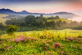 stock photo of early morning  - savory flowers in dew on the meadow in the mountains of the cool early morning - JPG