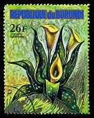 Republic Of Burundi - Circa 1974: A Stamp Printed In Republic Of Burundi Shows Zantedeschia Tropical