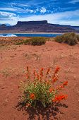 Wild Flowers Near Evaporation Ponds - Potash Road In Moab Utah
