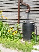 pic of downspouts  - Plastic barrel for recycling rainwater with sunflowers - JPG