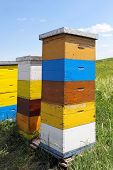 stock photo of beehive  - Painted wooden beehives with active honey bees - JPG