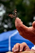 Borboleta repousa suavemente sobre as pontas dos dedos da mão do homem