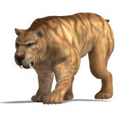 foto of saber tooth tiger  - saber - JPG