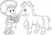 foto of feeding horse  - Little boy feeding a pony with grass - JPG