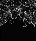 Beautiful Black-and-white Background With Lilies, Hand-drawn.