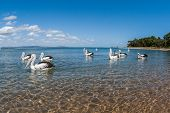 Pelican Birds Blue Waters Landscape