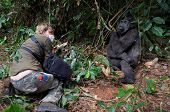 Photographer  And Lowland Gorilla.