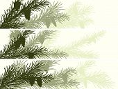 Horizontal Banner Of Spruce Branch.