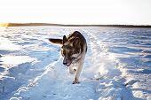 Dog Run Frontal