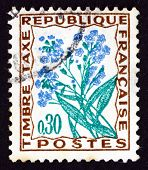 Postage Stamp France 1964 Forget-me-not, Flower