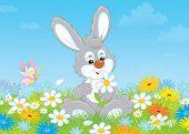 Bunny with a daisy