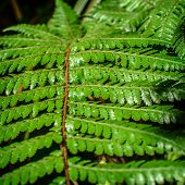 Detail of a beautiful leaf of Fern close-up