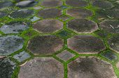 foto of interlocking  - the interlocking concrete pavement with moss growing along - JPG