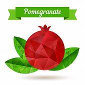 Pomegranate, Vector Illustration.