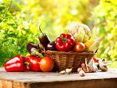 Vegetables. Fresh Organic Bio Vegetable in a Basket. Over Nature blurred bokeh Background. Gardening concept