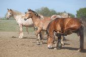 Batch Of Horses In Paddock