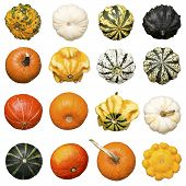 Lot Of Pumpkins, Isolated