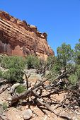 picture of pinus  - Colorado National Monument in the United States - JPG