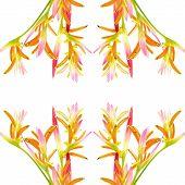 Heliconia Sassy