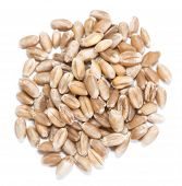 Wheat Grains (isolated On White)