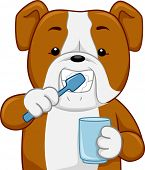 pic of dog teeth  - Illustration of a Bull Dog Brushing its Teeth - JPG