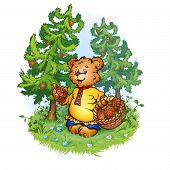 Vector illustration of bruin bear with pine cones