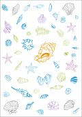 50 Seashells and Starfish doodle vector collection