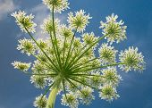 Cute Flower Field Detail