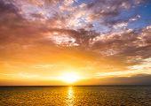 Coast View Morning Glory
