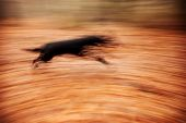 Abstract Background. Motion Blurred Running Dog In Autumnal Park.