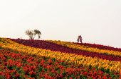 Couples in field of flowers