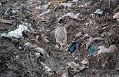 image of waste reduction  - Picture of a plastic garbage - JPG