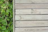 Clover Leaf And Deck