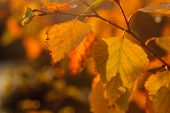 stock photo of trough  - Autumn colors in Sweden. Photo taken in Delsj� in Gothenburg. The sun rays at the sunset trough the leaves
