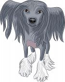 Vector Chinese Crested Dog.