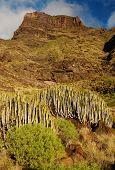 Gran Canaria Coast, Canary Islands, Spain, Europe