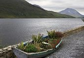 Flower bed in a boat. National park Connemara.
