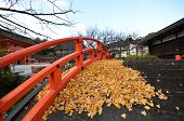 Yellow Leaves On The Bridge In Shimogamo-jinja Shrine Kyoto