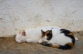picture of stonewalled  - Two cats sleeping by stonewall in backyard - JPG