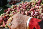foto of tamarind  - Manila tamarind fruit at the market in hand - JPG