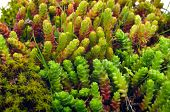 picture of lichenes  - Macro shoot of green moss and lichen - JPG