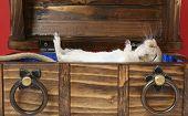 Dead Family Pet In Coffin