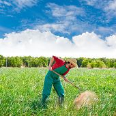 picture of hoe  - Farmer man working in onion orchard field with hoe tool - JPG